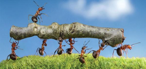 hard work-ants